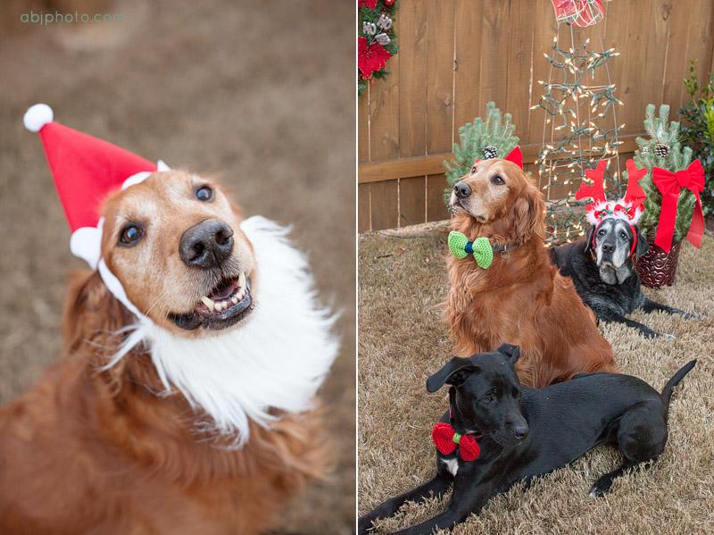 Holiday Dog Portraits Atlanta02