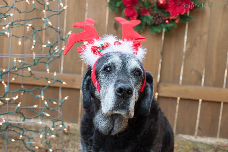 Holiday Dog Portraits Atlanta03