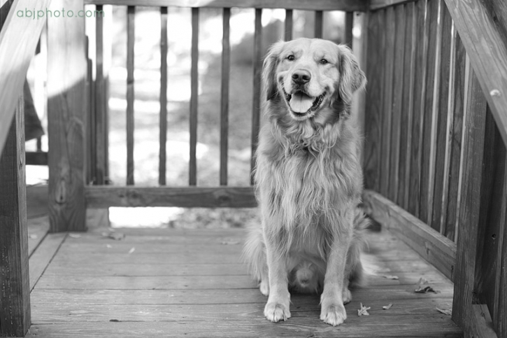 Atlanta Dog Photographer01